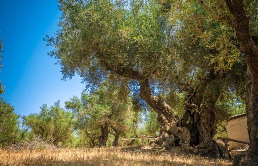 leedas-villas-zakynthos-farm-photo-00043-scaled